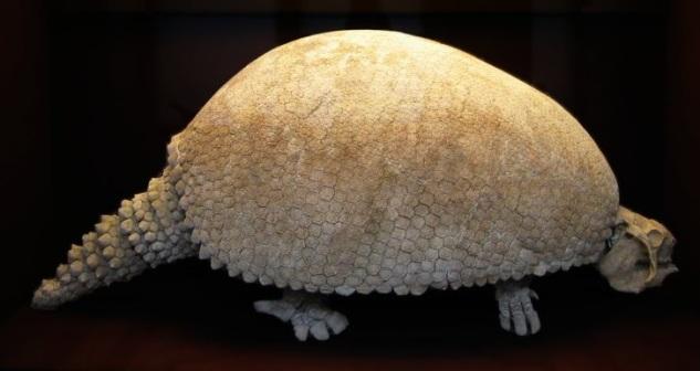 Glyptodon.jpg